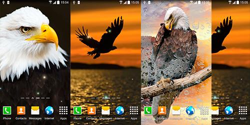 Птицы Живые Обои на Андроид