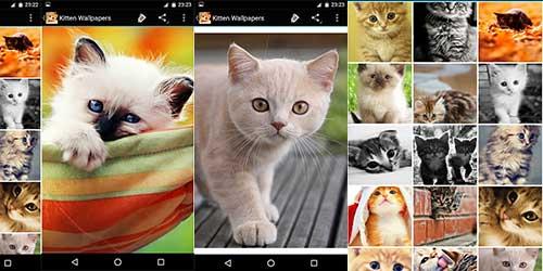 Обои с милыми котятами на Андроид